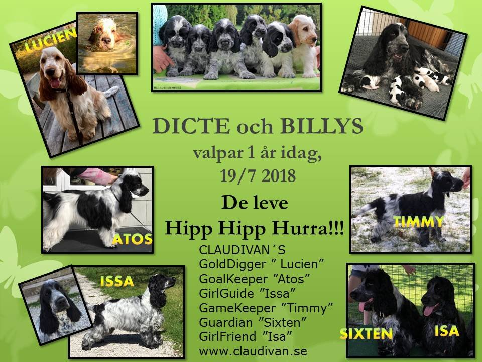 Dicte - Billy valpar 1 år
