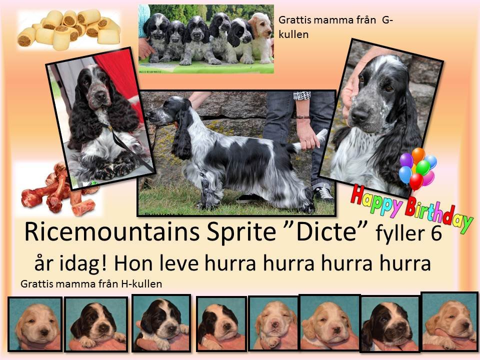 Ricemountains Sprite 6 år